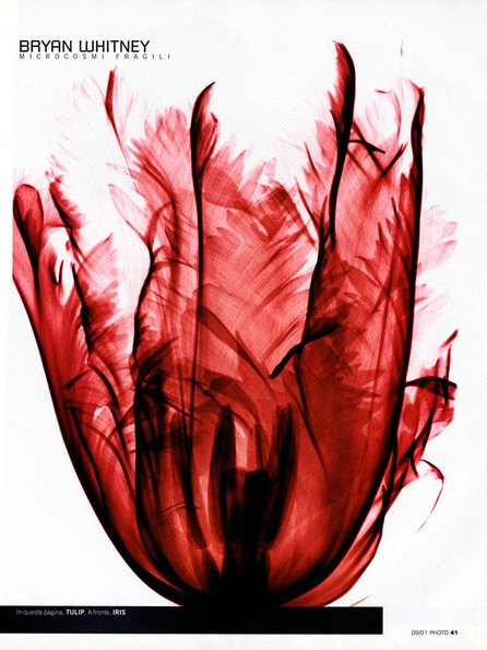Tulip tearsheet.jpg