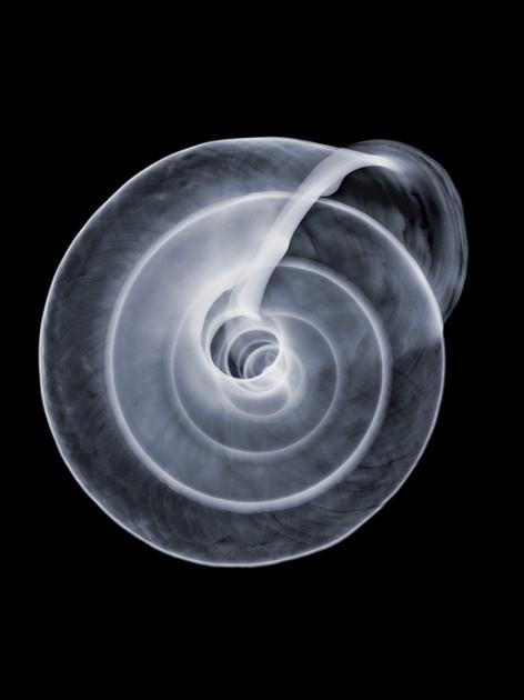Circular-Shell.jpg