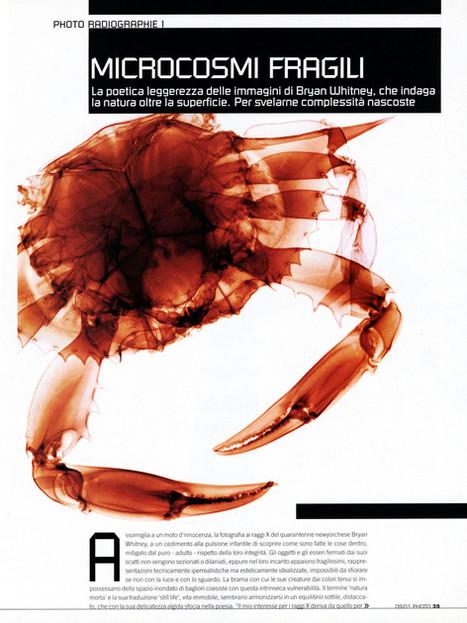 Crab-tear-sheet.jpg
