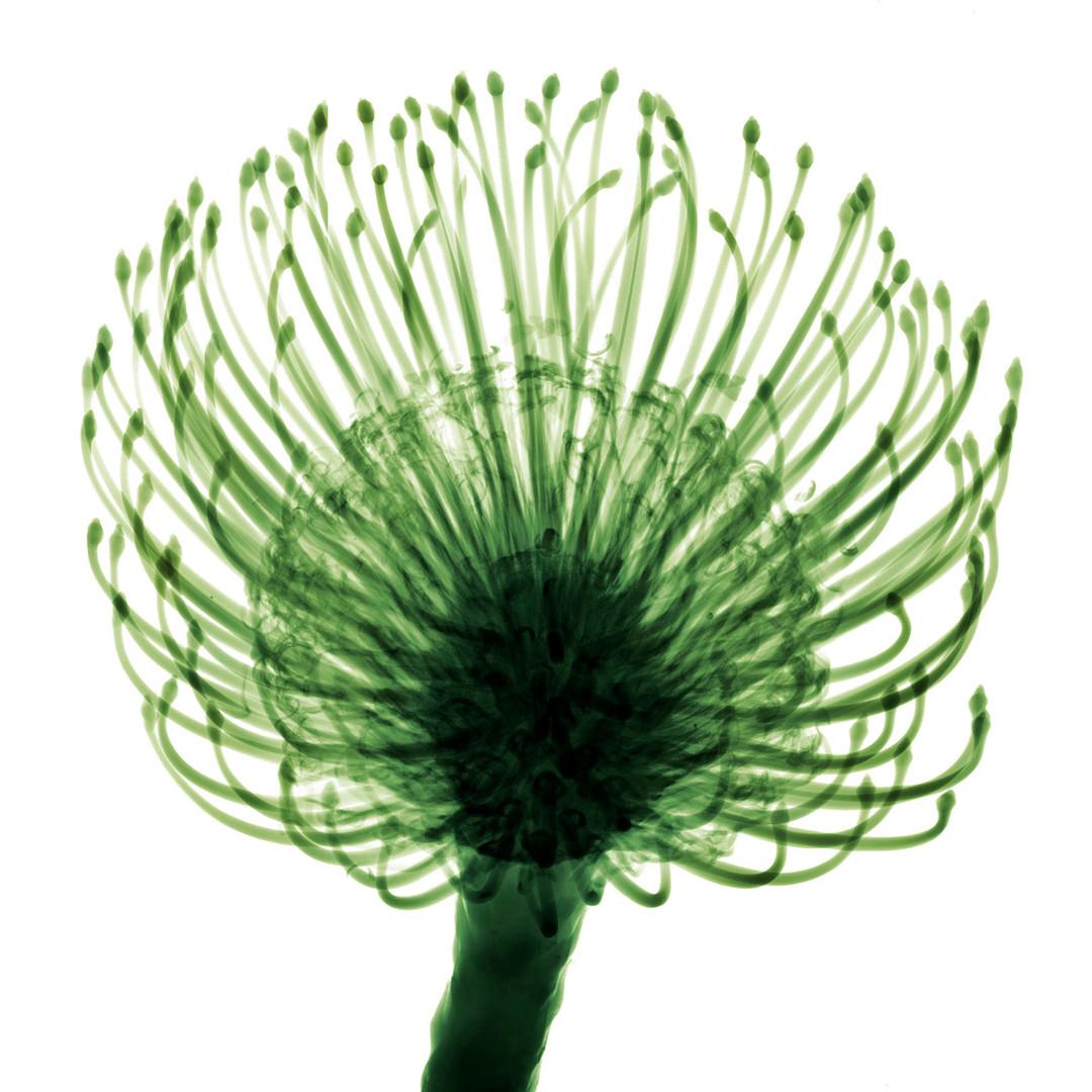 mans-flower.jpg
