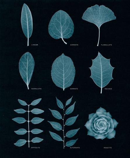 leaves-tearsheet.jpg