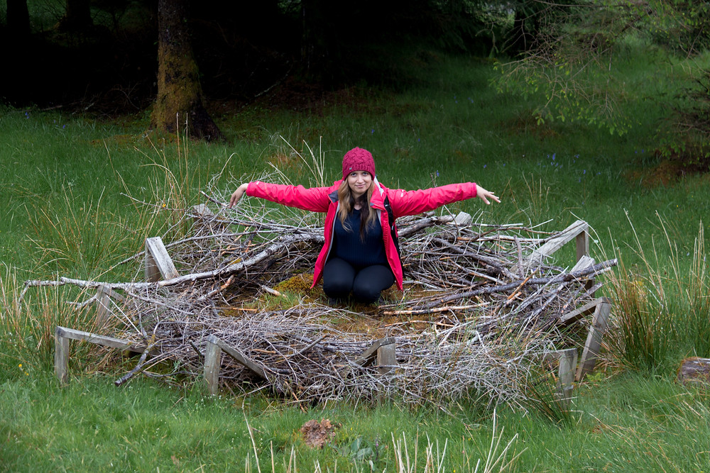 Replica of Sea Eagle nest