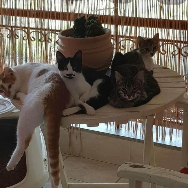 Katzen bei Foteini zuhause