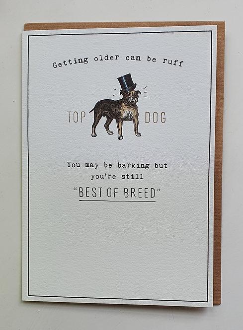 Happy Birthday Top Dog