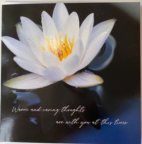 Sympathy - Beautiful Waterlily
