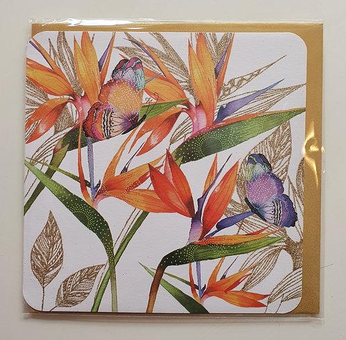 Bird of Paradise Flowers & Butterflies