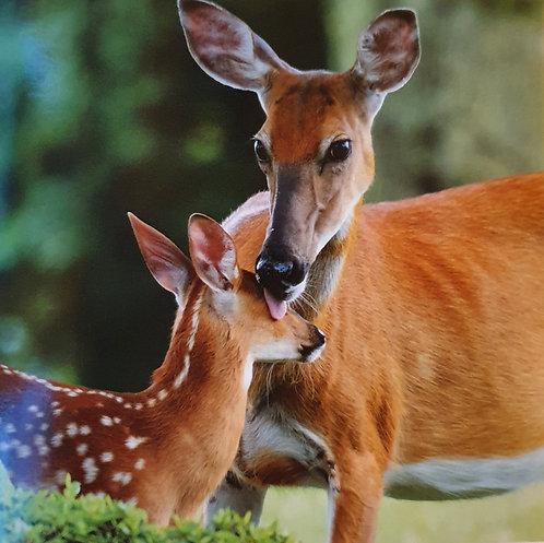 Deer & Fawn