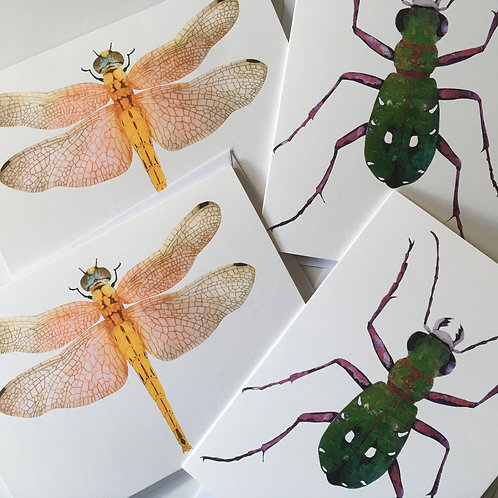Set of four greetings cards, Dragonfly and Green Tiger Beetle.
