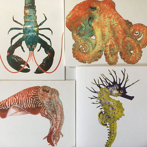 Set of four greetings cards, Seahorse, Octopus, Cuttlefish and Lobster. Designed