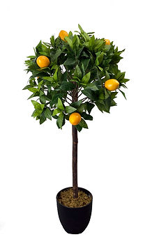 Sitruspuu tekokasvi