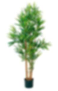 tekokasvi Bambu