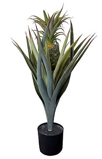 Ananas tekokasvi