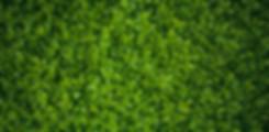viherseinä-pieni (1).jpg