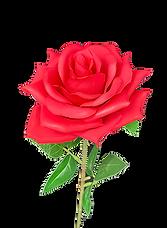 Silkkikukka ruusu