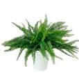 Pienet tekoviherkasvit