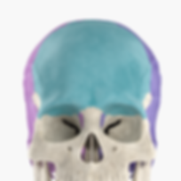 icon_skeletal.png