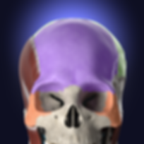 Anatomyka app icon.png