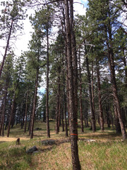 Mitigation Marked Trees