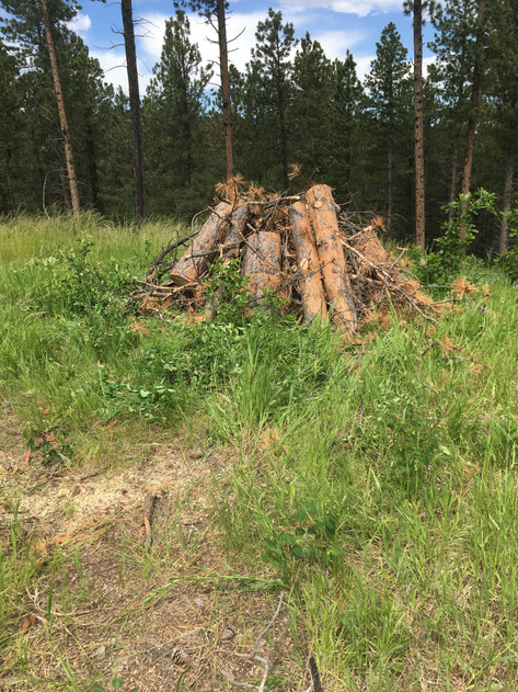Single Tree Brush Stack