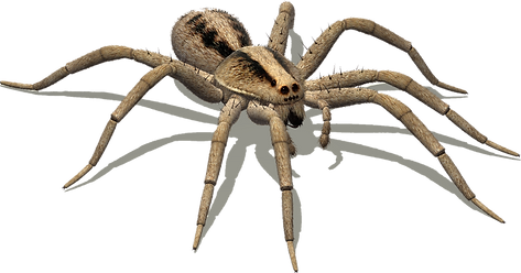 130-1307834_wolf-spider-png.png