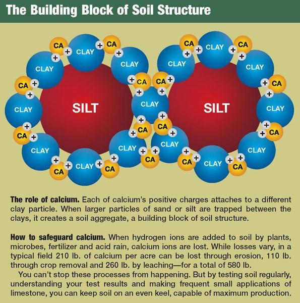 Calcium and plant health