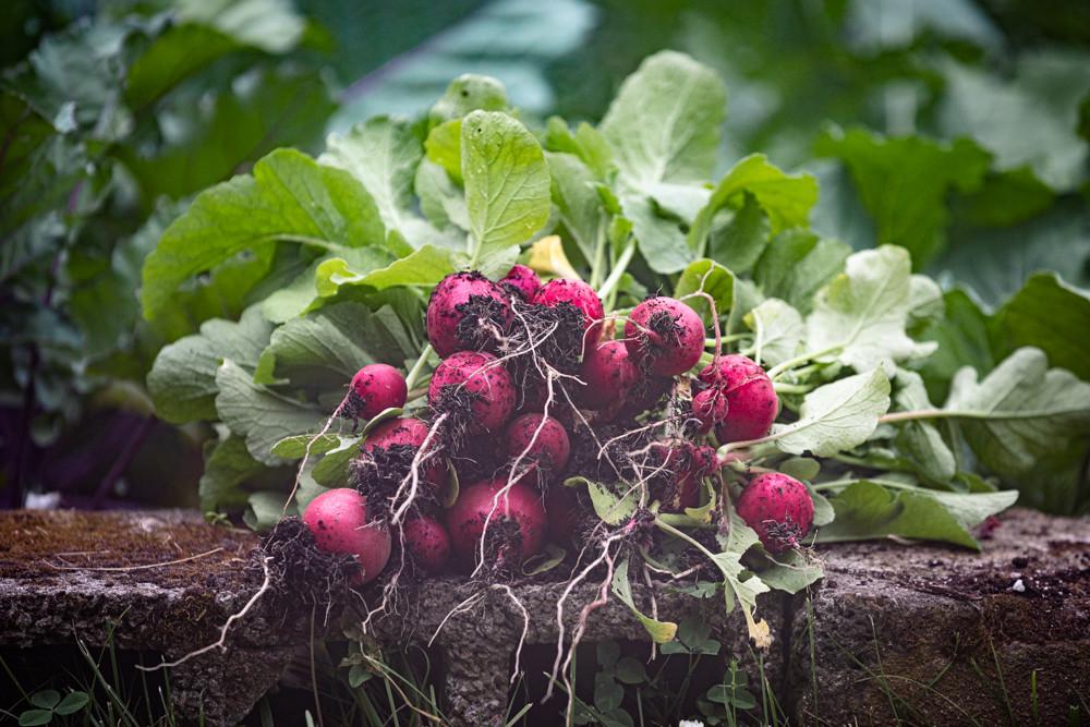 living soil nashville tn