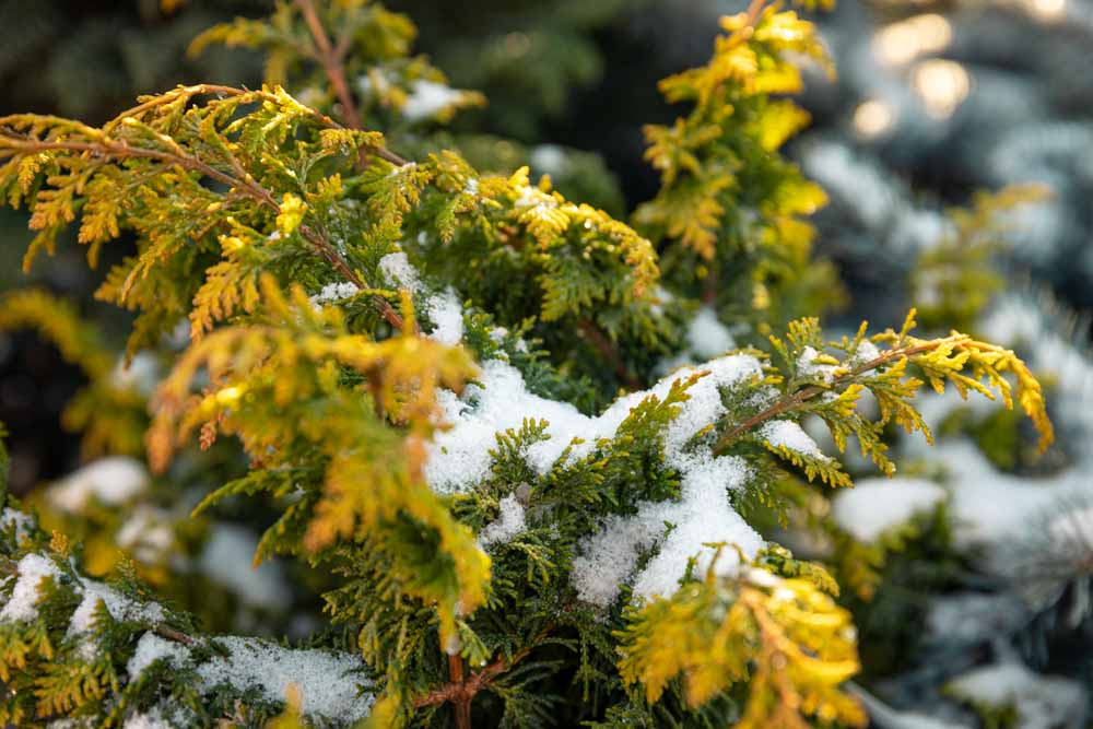 How Winter Benefits your garden