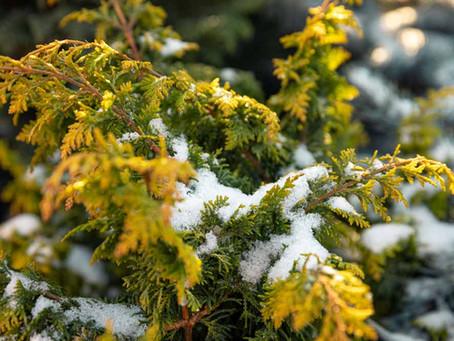 How Winter Benefits Your Garden