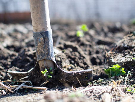 What is Carbon in Soil and Why Does it Matter?