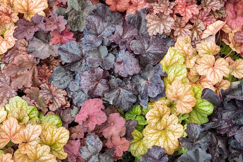 EarthMix garden soil