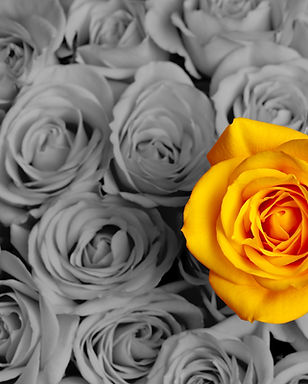 Standing out in a crowd yellow rose.jpg