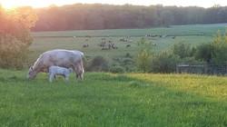 Kindred Crossing Farm