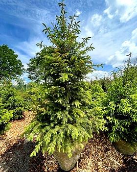 Tree_5_edited.jpg