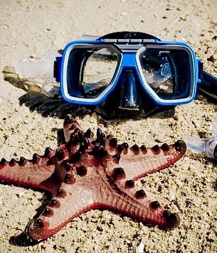 Nilaveli Island Snorkeling