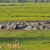 3D2N/2D1N Kumana Wildlife Camping Incursion