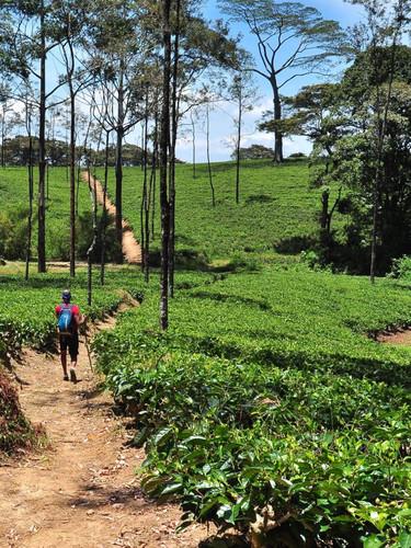 Levallon GR Ancient Tea Trail