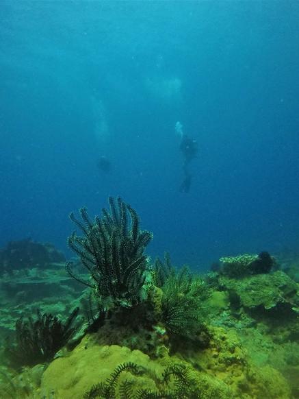 Unawatuna Diving Down South