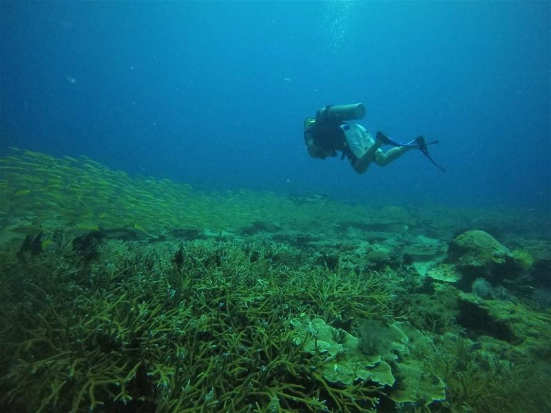 Diving Nilaveli