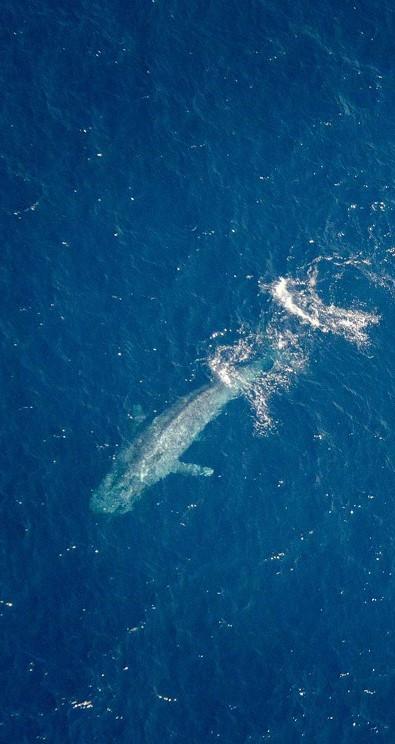 Skyview Whale Watching & Scenic Flight