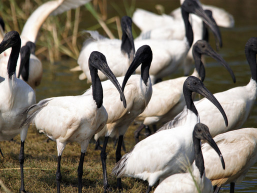 Adventure Birding Safari Expedition in Jaffna - Sri Lanka