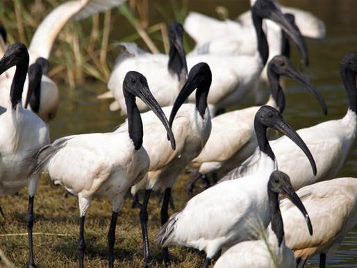 Adventure Birding Safari Expedition in Jaffna - Sri Lanka