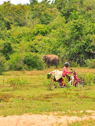 Rural & Wild Motorides Batticaloa