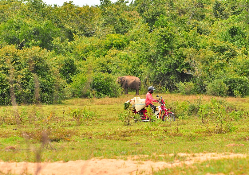 Rural & Wild Motorides Batticaloa