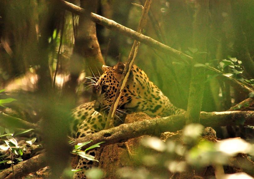 Yala Wildlife Glamping Retreat