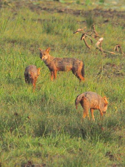 Untouched Maduru Oya Camping Safari