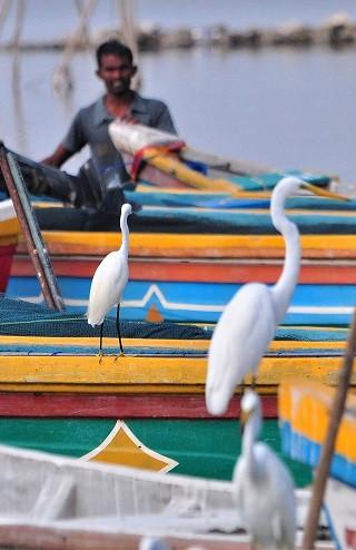 Tamil Fishing Community & Mannar Birding