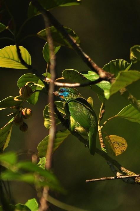 Sinharaja North Gate Birding Walk