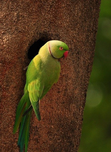 Wildlife & Bird Watching