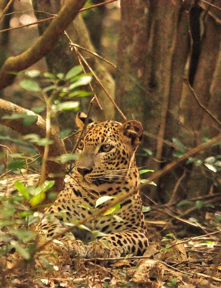 Journey Through Wild Wilpattu