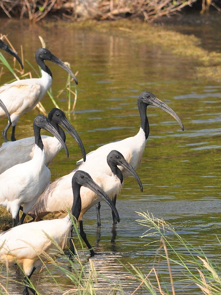 7D6N Birding Trip To The North